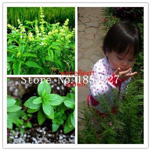 100/bag Stevia Seeds, Stevia Herb Seeds, New Live Fresh Seeds, Guaranteed 90%+ Germination