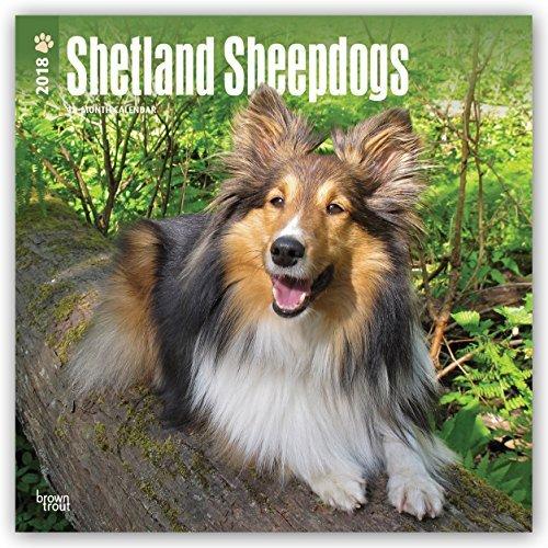 Shetland Sheepdogs 2018 Monthly Square Wall Calendar
