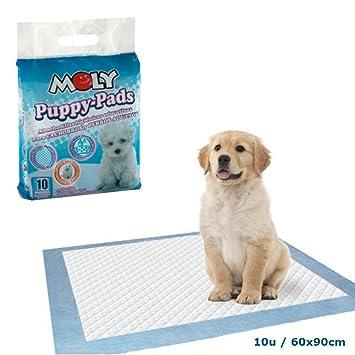 Pañales para perros adultos