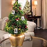 Jackson & Perkins Merry Memories Deluxe Tree - Live Miniature Alberta Spruce Tree