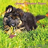 Puppies Calendar - 2017 Wall Calendars - Calendar 2016 - Dog Breed Calendars - Monthly Wall Calendar - German Shepherd Puppies Calendar by Magnum