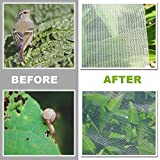 YBB Bug Insect Garden Barrier Netting Plant