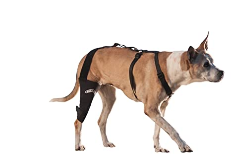 ea42f363c3 Amazon.com: WalkAbout Canine Knee Brace (Small 7-9