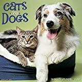 2016 Cats & Dogs Wall Calendar