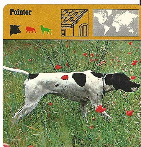 1975 Editions Rencontre, Animals Card, 13.293 Pointer, Dog