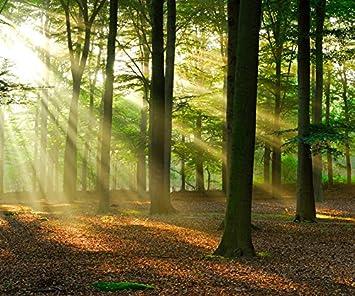 Vlies-Fototapete Fototapeten Tapete aus Vlies Poster Foto Sonnenlicht Wald