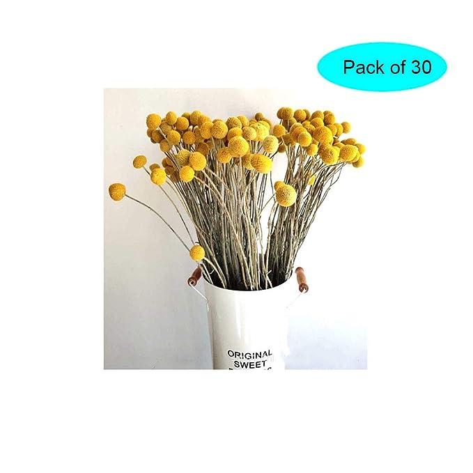 100 St/ück getrocknete Weizen-Gersten-Bastelrequisiten High Simulation K/ünstliche Blumen Weizen Sheaves getrocknete Blumen f/ür Zuhause Hochzeit Party Dekorationen
