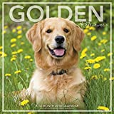 2018 Golden Retrievers Wall Calendar (Landmark)