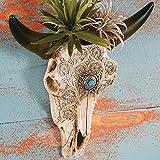 Black Forest Decor Steer Skull Wall Vase Review