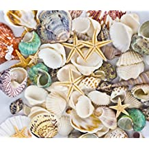 Famoby Sea Shells Mixed Beach Seashells Starfish for Beach Theme Party Wedding Decorations DIY Crafts Candle Making Fish Tank Vase Fillers Home Decorations Supplies 70+ pcs