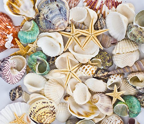Famoby Sea Shells Mixed Beach Seashells Starfish for Beach Theme Party Wedding Decorations DIY Crafts Candle Making Fish Tank Vase Fillers Home Decorations Supplies 70+ pcs -