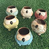 Mr. Garden B 3.15×2.76inches Owl Pot Ceramic Flowing Glaze Base Serial Set Succulent Plant Pot Cactus Plant Pot Flower Pot Container Planter Bonsai Pots With A Hole, Multicolored,6Pack Review