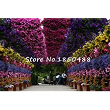 200 Hanging petunia seeds, Balcony potted trailing creeper petunia flower seeds, Flower pots planters for garden, 200 particles