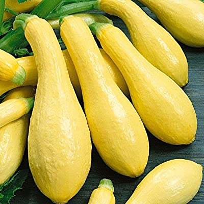 Summer Early Prolific Straightneck Squash Seeds(Yellow)! - 50+ Premium Heirloom Seeds - ON Sale! - Cucurbita Pepo - (Isla's Garden Seeds) - Non GMO - 90% Germination - Total Quality : Garden & Outdoor