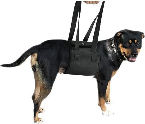 MIAODI arnés de Apoyo para Perro Ayuda a Perros con Patas traseras ...