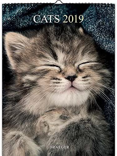 DRAEGER 79003104 - Calendario de pared (29 x 39 cm), diseño de gatos 2019: Amazon.es: Oficina y papelería