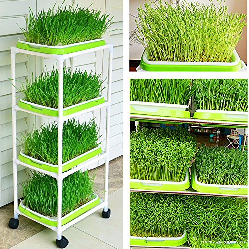 Seed Sprouter Trays with 4 Layers Shelf Soil-Free Healthy Wheatgrass Seeds Grower & Storage Trays for Garden Home by LeJoy Garden (Image #2)