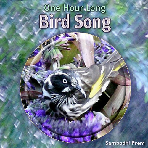 One Hour Long Bird Song