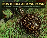 img - for Box Turtle at Long Pond book / textbook / text book