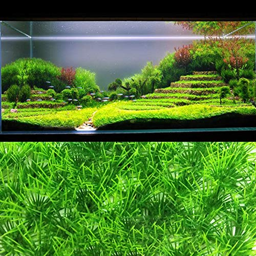 (Best Quality - Decorations - Aquarium Plant Fine Pine Needle Lawn Easy Growing Aquarium Water Plant Grass Seed Fish Tank Lawn Decor - by SeedWorld - 1 PCs)