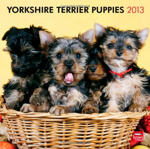 Yorkie Puppies 2013 - Yorkshire Terrier Welpen - Original BrownTrout-Kalender