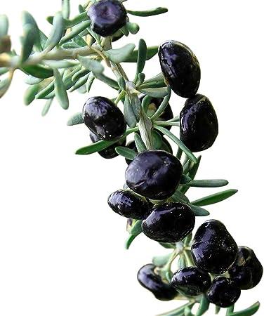 Amazon Com Lycium Barbarum Lycium Ruthenicum Black Goji Berry