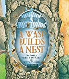 img - for A Wasp Builds a Nest: See Inside a Paper Wasp's Nest and Watch It Grow book / textbook / text book