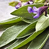 SAGE FRAGRANCE OIL - 8 OZ - FOR CANDLE & SOAP MAKING BY FRAGRANCEBUDDY- FREE S&H IN USA