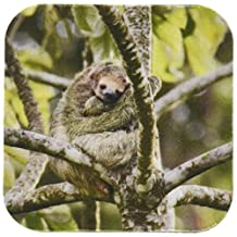 3dRose cst_87142_2 Costa Rica, Three-toed sloth wildlife - SA22 BJA0001 - Jaynes Gallery - Soft Coasters, Set of 8