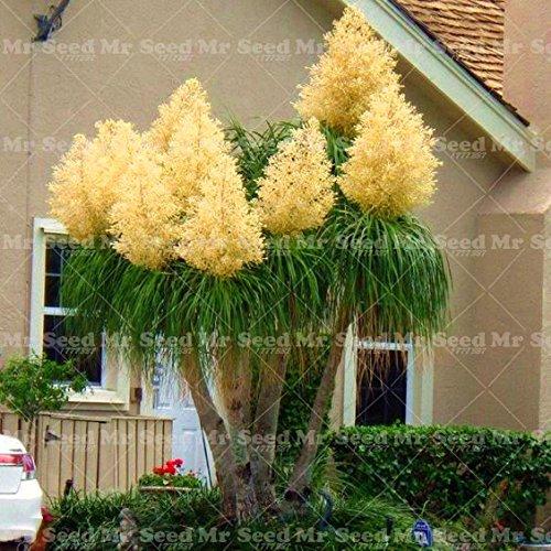 Tree Seeds Exotic Plants Bonsai Tree Tropical Ornamental Flower Evergreen Plant Pot For Home Garden ()