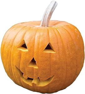 Burpee 51375A Jack O' Lantern Pumpkin Seeds 100 seeds
