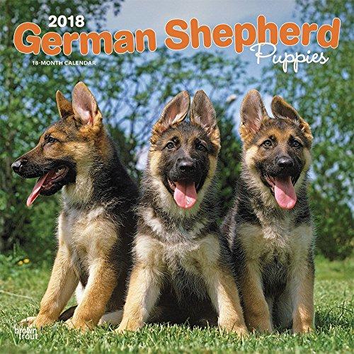German Shepherd Puppies 2018 Monthly Square Wall Calendar
