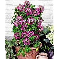 Bloom Green Co. 120 piezas de fruta de la pasión Bonsai (Passiflora Incarnata), bricolaje planta en maceta, planta de…