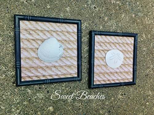 Set of 3 - Clam Shell, Sand Dollar and Starfish Wall Decor Beach Seaside Nautical Wall Decor