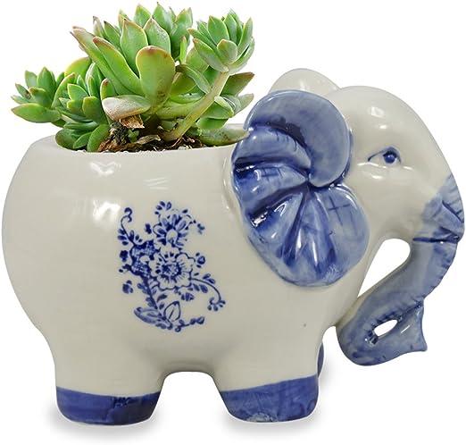 Dahlia elefante hecho a mano cerámica carnosas maceta/maceta ...