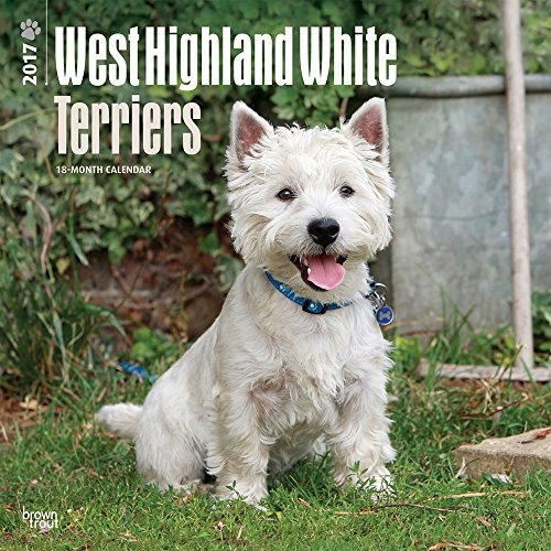 2017 Monthly Wall Calendar - West Highland White Terriers