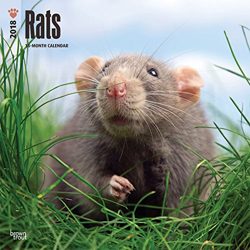 Rats 2018 12 x 12 Inch Monthly Square Wall Calendar, Domestic Animals Mouse (Multilingual Edition) by BrownTrout Publishers