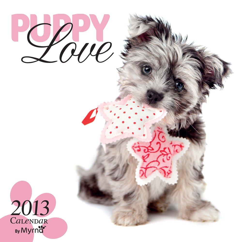 Puppy Love 2013: Hundewelpen