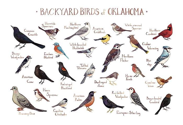 amazon com backyard birds of oklahoma field guide art print handmade
