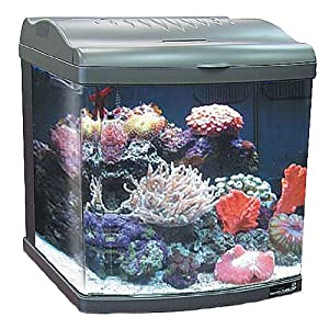 Jbj 24 gallon nano cube deluxe aquarium 2x36w for Bio cube fish tank