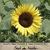 Package of 80 Seeds, Lemon Queen Sunflower (Helianthus annuus) Non-GMO Seeds by Seed Needs