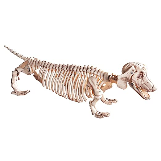 amazoncom dachshund skeleton halloween decoration patio lawn garden