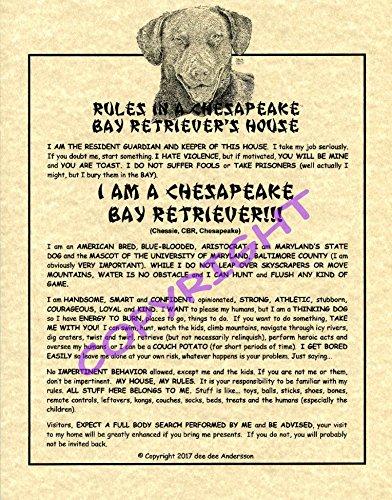 Rules In A Chesapeake Bay Retriever's House