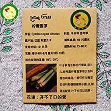 Original Packaging Citronella, Lemon Grass Seeds A Strong Lemon Flavor Herbs, Spices Seeds 10 / Bag