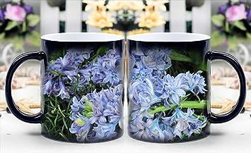 Resultado de imagen para el cafe de la primavera