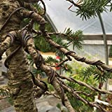 Bonsai Wire for Bonsai Trees - Seven Pack Quality
