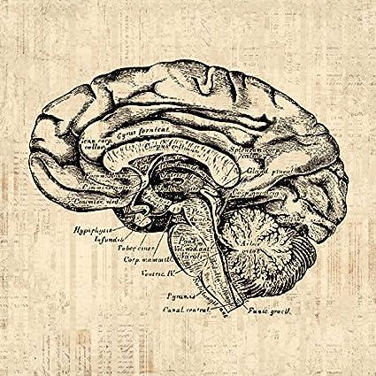Old Brain Diagram - Smart Wiring Diagrams •