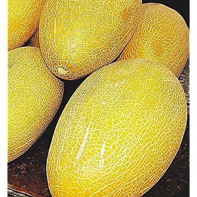 Melon seeds Macrocarpa. Buharka Ukraine heirloom Vegetable seeds : Garden & Outdoor