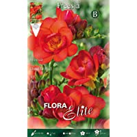 Bulbos primaverales Freesia doble rojo paquete de 10