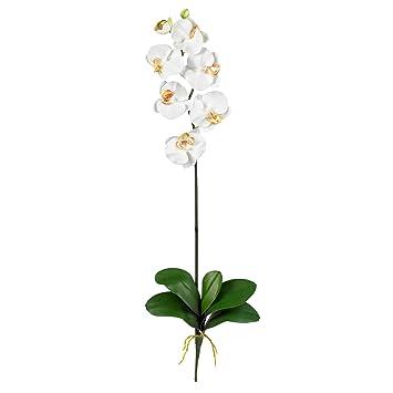 Amazon cream phalaenopsis silk orchid flower wleaves 6 stems cream phalaenopsis silk orchid flower wleaves 6 stems mightylinksfo